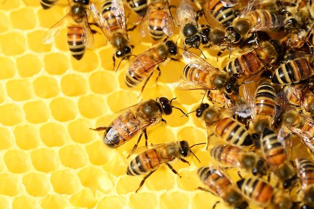 Mật ong rất có lợi tuyến giáp
