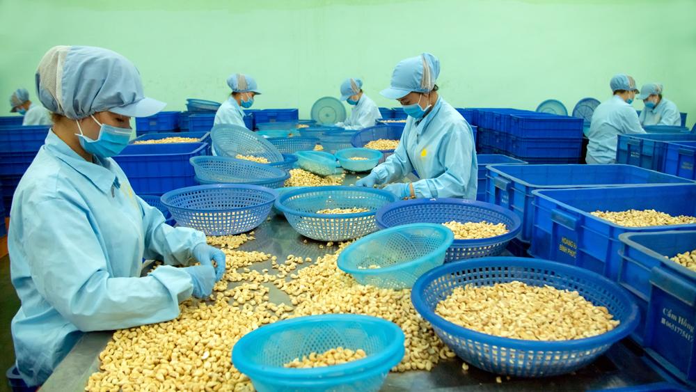 Nhà máy sản xuất hạt điều của KHouse